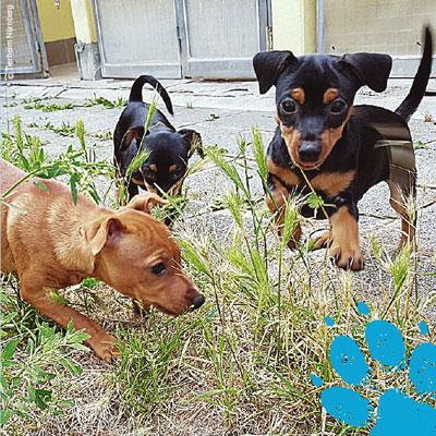 SOS für Tiere: Welpenhandel